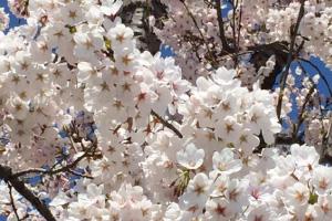 高台散策〜春めぐり〜